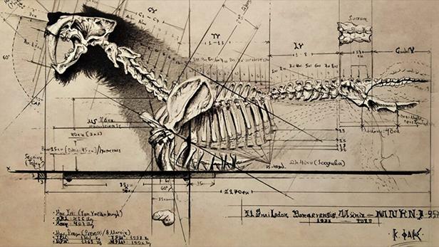 Konstantinos´s drawing of the Smilodon Populator